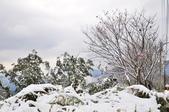 2016.01.25-烏來西羅岸雪景:DSC_5215.JPG