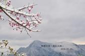 2016.01.25-烏來西羅岸雪景:DSC_5213-1.jpg