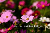 2013.11.24士林官邸菊世無雙:DSC_8633.jpg