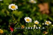 2013.11.24士林官邸菊世無雙:DSC_8636.jpg