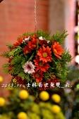 2013.11.24士林官邸菊世無雙:DSC_8692.jpg
