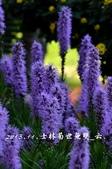2013.11.24士林官邸菊世無雙:DSC_8619.jpg