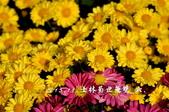 2013.11.24士林官邸菊世無雙:DSC_8634.jpg