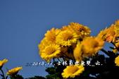2013.11.24士林官邸菊世無雙:DSC_8677.jpg