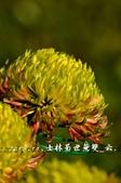 2013.11.24士林官邸菊世無雙:DSC_8672.jpg