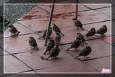 101.12.09宜蘭羅東運動公園及伯朗咖啡城堡:101.12.09宜蘭運動公園及伯朗咖啡城堡IMG_1514.jpg