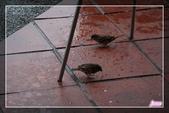 101.12.09宜蘭羅東運動公園及伯朗咖啡城堡:101.12.09宜蘭運動公園及伯朗咖啡城堡IMG_1558.jpg
