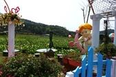 20140318_陽明山_竹子湖賞海芋:P1900837(001).jpg