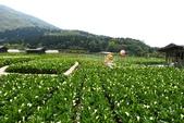20140318_陽明山_竹子湖賞海芋:P1900847(001).jpg