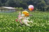 20140318_陽明山_竹子湖賞海芋:P1900850(001).jpg
