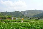 20140318_陽明山_竹子湖賞海芋:P1900856(001).jpg