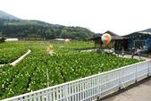 20140318_陽明山_竹子湖賞海芋:P1900861(001).jpg
