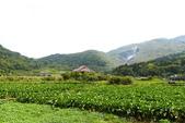 20140318_陽明山_竹子湖賞海芋:P1900865(001).jpg