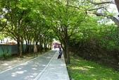 20140323_八里_水筆仔公園:P1910488(001).jpg