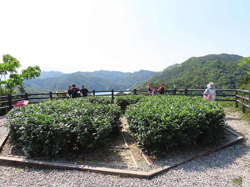 20210411_石碇_八卦茶園:2021-04-11 14-16-06(001).jpg