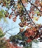 :稍來山賞楓及雲海 054.jpg