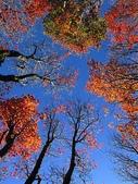 :稍來山賞楓及雲海 393.jpg