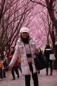 20120218武陵賞櫻塞爆單日遊:P1040627.JPG