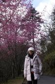 20120218武陵賞櫻塞爆單日遊:P1040644.JPG