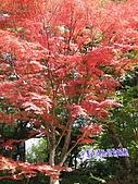 日本大東北賞楓:IMG_0142.jpg