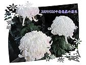 日本大東北賞楓:IMG_0087-01.jpg