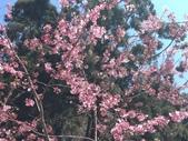 杉林溪的櫻花林:IMG_20210316_111917.jpg