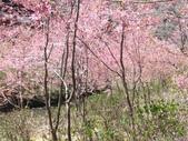 杉林溪的櫻花林:IMG_20210316_112021_1.jpg
