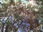 杉林溪 遊踪:IMG_20201117_124838.jpg