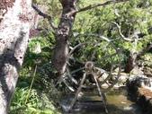 杉林溪 遊踪:IMG_20201117_131242_1.jpg