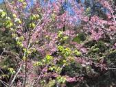 杉林溪的櫻花林:IMG_20210316_111928_1.jpg