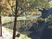 杉林溪 遊踪:IMG_20201117_105143_1.jpg