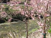 杉林溪的櫻花林:IMG_20210316_112004_1.jpg
