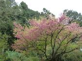 阿里山森林園區:175.JPG