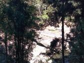 杉林溪 遊踪:IMG_20201117_103319_1.jpg