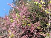 杉林溪的櫻花林:IMG_20210316_111935.jpg
