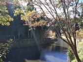 杉林溪 遊踪:IMG_20201117_110318_1.jpg