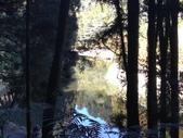 杉林溪 遊踪:IMG_20201117_102224_1.jpg