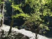 杉林溪 遊踪:IMG_20201117_104244.jpg
