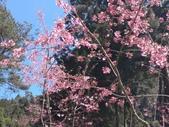 杉林溪的櫻花林:IMG_20210316_111921_1.jpg