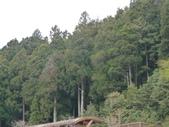 阿里山森林園區:157.JPG