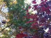 杉林溪 遊踪:IMG_20201117_125442_1.jpg