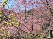 杉林溪的櫻花林:IMG_20210316_111515_1.jpg