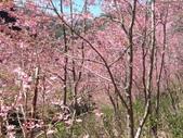 杉林溪的櫻花林:IMG_20210316_111900.jpg