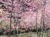 杉林溪的櫻花林:IMG_20210316_112026_1.jpg