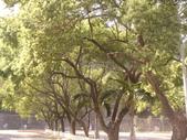 山地門  原住民文化園區:P1080204.JPG