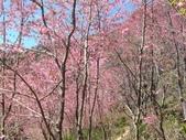 杉林溪的櫻花林:IMG_20210316_111903_1.jpg