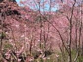 杉林溪的櫻花林:IMG_20210316_111947_1.jpg