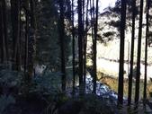 杉林溪 遊踪:IMG_20201117_102208_1.jpg
