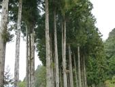 阿里山森林園區:166.JPG