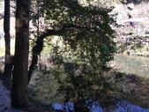 杉林溪 遊踪:IMG_20201117_101637_1.jpg